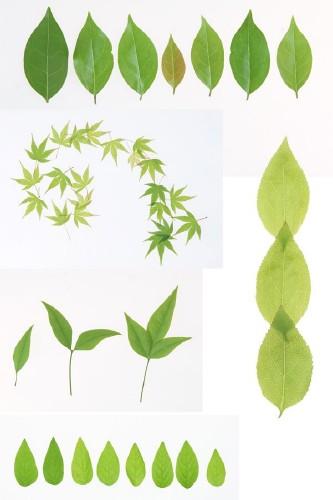 Листья растений (большая подборка)