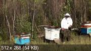 Пчеловодство. Продукты пчеловодства. Источники дохода (2014)