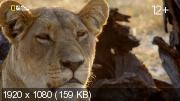 Слон Король Калахари (2016) [2,70 ГБ]